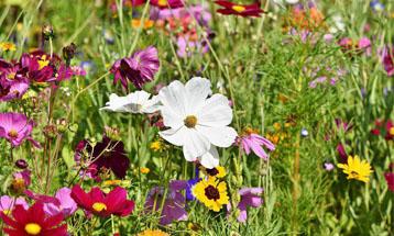 «Фестиваль полевых цветов»