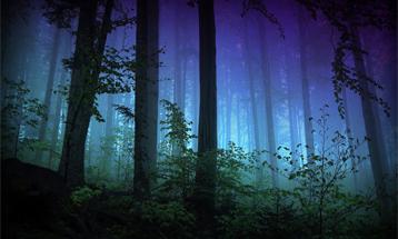 Приходите на «Звуки ночного леса»