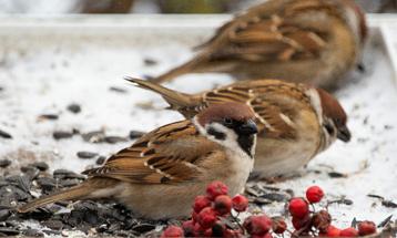 «Птичьи секреты» раскроют