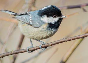Птицы-синицы к зиме готовы