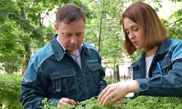 Обследовали деревья и кустарники